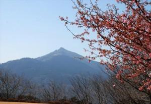 DSC_0220b_kawatsu-sakura_Flower-park_Yasato_2013[1]