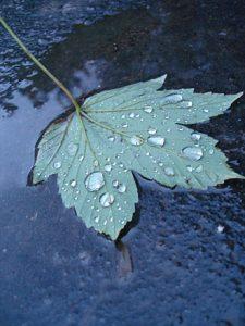 autumn-leaves-3-1391205